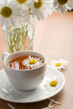 White cup of herbal tea and camomile flowers Stock Image