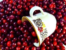 Cup with berries stock images