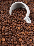 A white cup with many coffee beans Stock Images