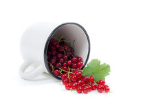 White cup with red currant berry in it and small bunch of red cu Stock Images