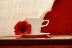 White cup, a red flower, luxurious background Stock Photos
