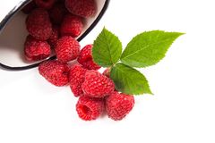 White cup with ripe raspberries and green leaf isolated on white. Close up view of white cup with fresh raspberries fruits and big green leaf of raspberry bush Royalty Free Stock Photo