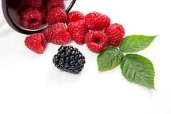 White cup with ripe raspberries with green leaf and one blackber. Close up view of white cup with fresh raspberries fruits with big green leaf of raspberry bush Stock Photo