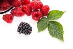 White cup with ripe raspberries with green leaf and one blackber. Close up view of white cup with fresh raspberries fruits with big green leaf of raspberry bush Stock Photos