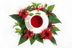 White cup of tea surrounded by the bergamot leaves and flowers. Isolated photo stock photos