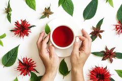 White cup of tea surrounded by the bergamot leaves and flowers. White cup of tea and woman s hands surrounded by the bergamot leaves and flowers. Isolated photo royalty free stock photo