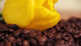 White cup and yellow flower on coffee beans. A small white mug in coffee beans. Yellow tulip on coffee beans stock video footage