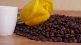 White cup and yellow flower on coffee beans. A small white mug in coffee beans. Yellow tulip on coffee beans. stock video footage