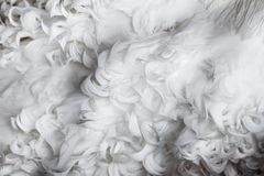 White curly feathers texture for background Royalty Free Stock Photo