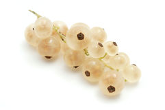 White currant Stock Photography