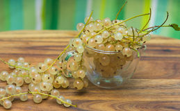 White currant. Royalty Free Stock Photo