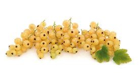 White Currant Fruit Stock Photography