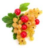 White currant fruit stock photo