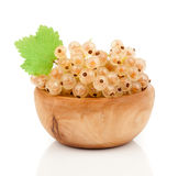 White currant fruit Stock Image