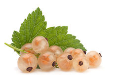 White currant Royalty Free Stock Image