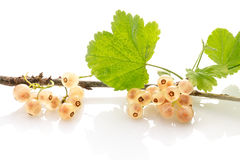 White currant with leaves isolated on a white Royalty Free Stock Image