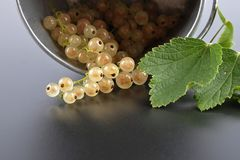 White currant with tin bucket on white. Colorful and crisp image of white currant with tin bucket on white Royalty Free Stock Images