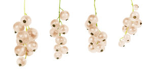 White currant on a white background Royalty Free Stock Images