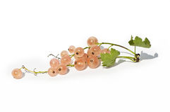 White currants Royalty Free Stock Images