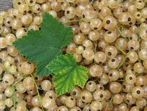 White currants Royalty Free Stock Image
