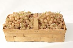 White currants. Fresh harvested white currants  in a chip basket against a neutral background Stock Photo