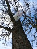 White cute cat on a tree branch stock image