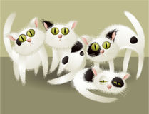 White cute cats Royalty Free Stock Photos
