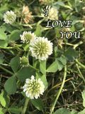 White cute flower photo with ` I Love You ` article Royalty Free Stock Photos