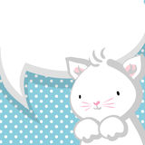 White cute little kitty baby blue backdrop Stock Images