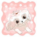 White cute puppy pink lap dog. Little dog with brown eyes vector illustration. Background vector illustration