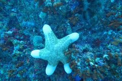 A white cute starfish Stock Images