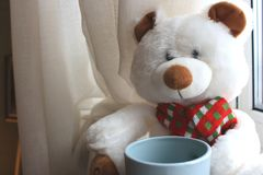 White cute teddy bear with cup sitting on window with curtains. Soft animal toy. Good morning concept. Romantic gift. White cute teddy bear with cup sitting on Stock Image