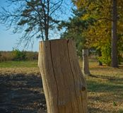 White cutoff tree trunk without bark, close up.  stock image