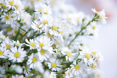 White cutter flower for decorate. White cutter flower for decorate Stock Images