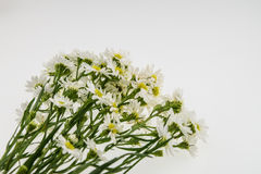 White cutter flower isolate on white Royalty Free Stock Images