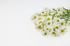 White cutter flower isolate on white Royalty Free Stock Photos