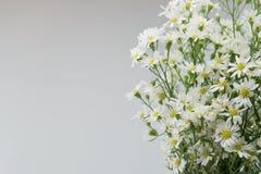 White cutter flower on white Stock Images