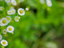 White cutter flowers in fresh garden Stock Photography