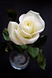 white czarną różę Obrazy Stock