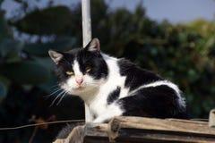 white czarnego kota Zdjęcia Stock