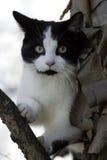 white czarnego kota zdjęcie royalty free