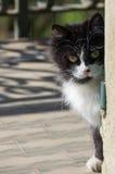 white czarnego kota Obrazy Stock