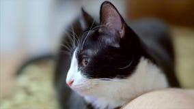 white czarnego kota zbiory