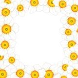 White Daffodil - Narcissus Flower Border. Vector Illustration.  Stock Photography