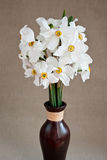 White daffodils in a vase Royalty Free Stock Image