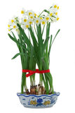 White daffodils in vase Stock Images
