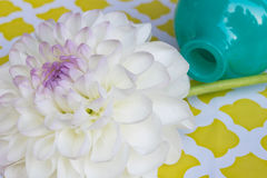 White dahlia with blue vase Stock Photo
