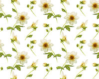 White Dahliaseamless pattern Royalty Free Stock Photography