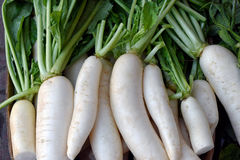 White Daikon radishes Royalty Free Stock Photography