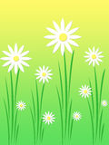White daises stock illustration